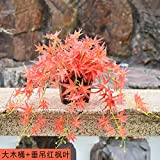 Blumen Simulation von Pflanzen Pflanzen Pflanzen Fake Innen- und Außendekoration hängende Wand grünen Topfpflanzen Blumen, großen Holzfass hängenden Red Maple Leaf