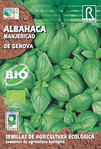 SEMILLAS ECOLOGICAS ALBAHACA DE GENOVA