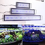 Zeiger Eco Aquarium Hood Led Lighting Fish Tank Light, White and Blue Adjustable 48'' - 60'