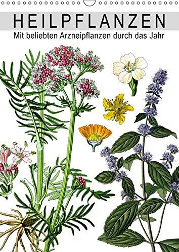 Heilpflanzen (Wandkalender 2019 DIN A3 hoch): Mit beliebten Arzneipflanzen durch das Jahr (Monatskalender, 14 Seiten ) (CALVENDO Gesundheit)