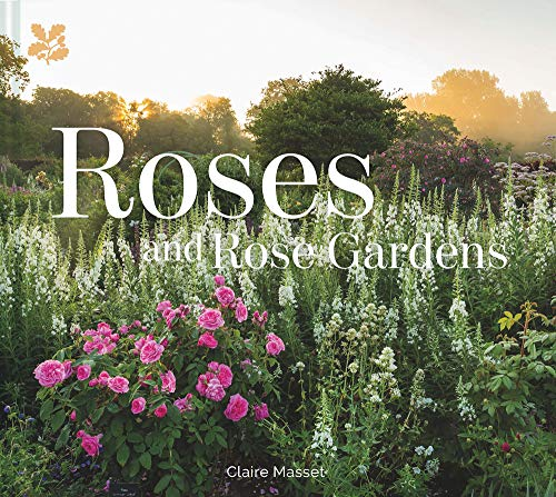 Planting Rose Garden (Roses and Rose Gardens)