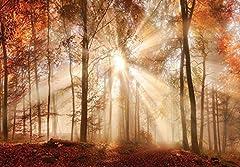 Idea Regalo - Carta da parati fotografica murale welt-der-träume | Autumn Forest in the sun | | carta da parati fotografica murale 10471_ p-ms | natura paesaggio foresta Woods Trees Sun Sunny, P8 (368cm. x 254cm.)