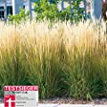 Reitgräser Variante von Garten Schlüter auf Du und dein Garten