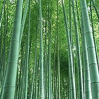 Grün Gelber Bambus Samen 35 Stück Moso Bambus Sichtschutz für Garten und Balkon