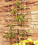Pérgola, enrejado de sauce impregnada y cuerda de yute, útil para hortalizas y animales, Largo: 200cm, Ancho:30 cm