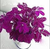 Heiße Angebote! 100pcs Samen Mimose Linn, Laub Mimose Sensitive Bonsai Pflanze Hausgarten-freies Verschiffen 1