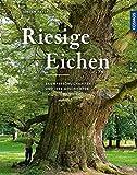 Riesige Eichen: Baumpersönlichkeiten und ihre Geschichten - Jeroen Pater