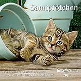 Samtpfötchen 2018 - Broschürenkalender - Wandkalender - Katzenkalender - mit herausnehmbarem Poster - Format 30 x 30 cm