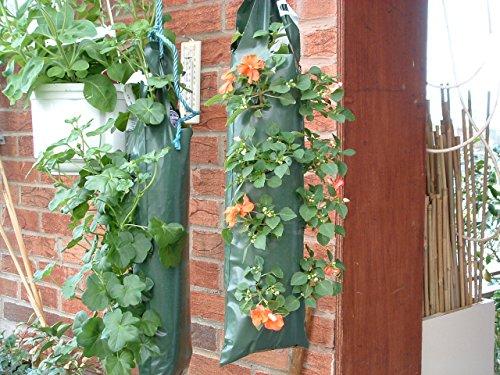 Planteurs Flower Fraise à suspendre pour 9 dos-bagagerie Petit Offre