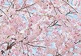 Fototapete PINK BLOSSOMS 366 x 254cm Kirschblüten, Kirschbaum rosa Blüten, Natur