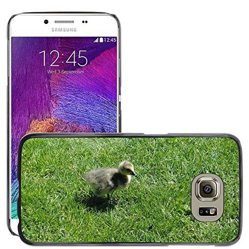 Nur Handy HOT Style Handy PC Hard Case Cover//m00139083Gosling Ente Küken Vogel Baby Young//Samsung Galaxy S6(passt Nicht für S6Edge)