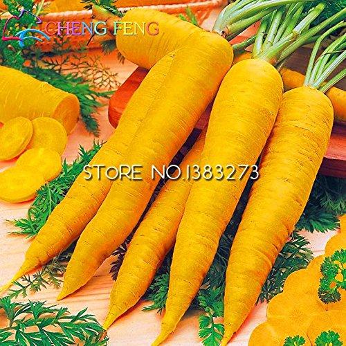 1 Paquete de 100 semillas de zanahoria buen sabor agradable color Tast de alta germinación planta vehículos Bonsai para el jardín de la semilla