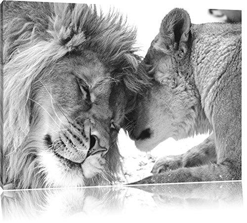 Bezauberndes kuschelndes Löwenpaar schwarz/weiß Format: 120x80 auf Leinwand, XXL riesige Bilder fertig gerahmt mit Keilrahmen, Kunstdruck auf Wandbild mit Rahmen, günstiger als Gemälde oder Ölbild, kein Poster oder Plakat