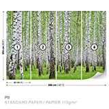 FORWALL DekoShop Fototapete Tapete Birke Wald Bäume AD157P8 (368cm x 254cm) Photo Wallpaper Mural