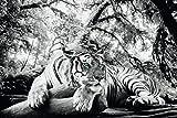 Poster Tiger im Wald liegend - Größe 91,5 x 61 cm - Maxiposter