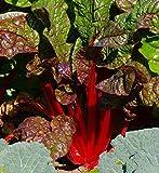 "Acelga roja""ruibarbo"" - 225 semillas"