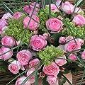 """Kletterrose """"Mini Eden Rose®"""" - hellrosa blühende Topfrose im 6 L Topf - frisch aus der Gärtnerei - Pflanzen-Kölle Gartenrose von Kölle's Beste bei Du und dein Garten"""