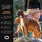 EzyDog Hundehalsband Double Up