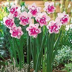 Idea Regalo - Kisshes Giardino - 100 pezzi semi di giunchiglia semi di fiori semi di fiori profumati bulbo per Barkon, giardino Hardy