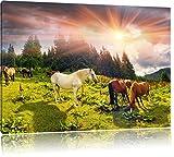 Carpathian Mustangs Pferde auf den Bergen, Format: 120x80 auf Leinwand, XXL riesige Bilder fertig gerahmt mit Keilrahmen, Kunstdruck auf Wandbild mit Rahmen, günstiger als Gemälde oder Ölbild, kein Poster oder Plakat