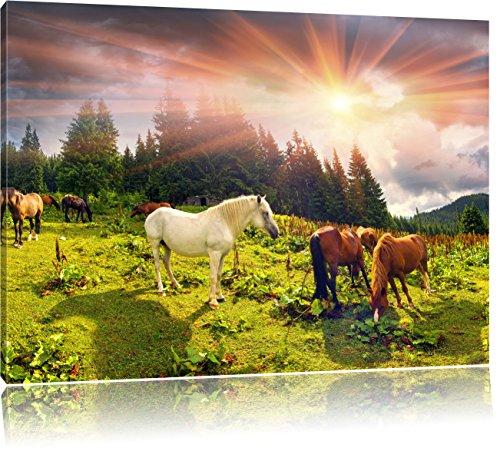 Carpathian Mustangs Pferde auf den Bergen, Format: 100x70 auf Leinwand, XXL riesige Bilder fertig gerahmt mit Keilrahmen, Kunstdruck auf Wandbild mit Rahmen, günstiger als Gemälde oder Ölbild, kein Poster oder Plakat (Bilder Ranch)