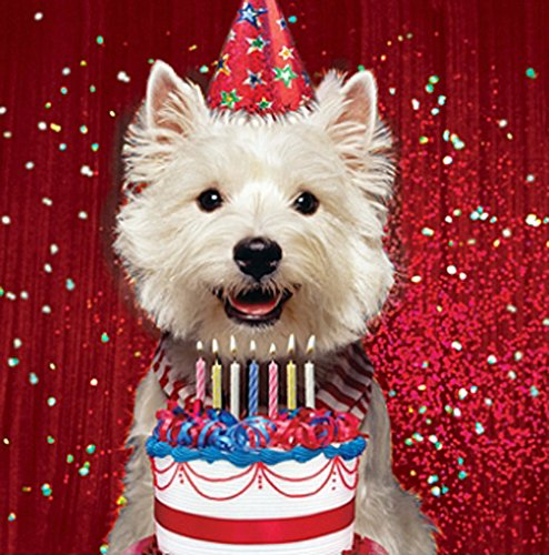westie-cake-birthday-card-birthday-glitz