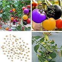 Portal Cool Las Semillas de Tomate: Arco Iris de Tomate casera de Las Semillas huerto de Semillas en macetas Ornamentales 100 Piezas