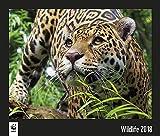 WWF Wildlife 2018: Jahreskalender