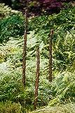 Rankstab aus Haselnuss, mit Weide umflochten in 3 Höhen (190 cm)