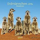 Erdmännchen - Broschur Kalender 2016 - Korsch-Verlag - offen 30 cm x 60 cm
