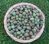 Mini Kiwi (Absolut WINTERHART IN Deutschland) 10 Samen 'Selbstbefruchtend' **Sorte Issai**