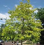 Nuova casa della pianta di giardino 10 Semi robinia, Robinia pseudoacacia, veloce! Semi dell'albero di trasporto