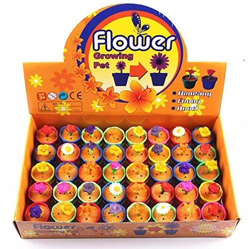 aiernuo-40-pcs-colorful-water-growing-flowers-children-kids-magic-cute-expansion-decoration-toys