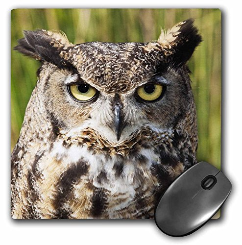 danita-delimont-owls-head-and-shoulders-of-a-great-horned-owl-na02-pwo0094-piperanne-worcester-mouse