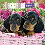 Dachshund Puppies 2016 Mini 7x7 (Multilingual Edition) by Browntrout Publishers (2015-07-15)