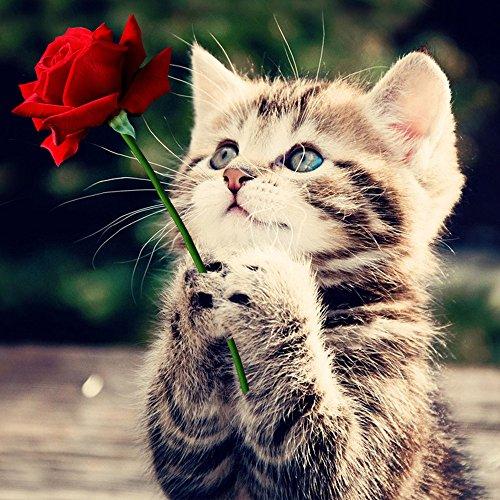 sunnymi Rose Katze Diamond Painting Bilder Set Steine DIY 5D Kreuzstich Wanddekoration Für Stickerei Malerei Deko Mit Kleben Diamant (mehrfarbig, 30*30CM) (Katze Bilder)