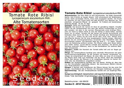 Tomate Rote Ribisl (Lycopersicum esculentum Mill.) 20 Samen BIO