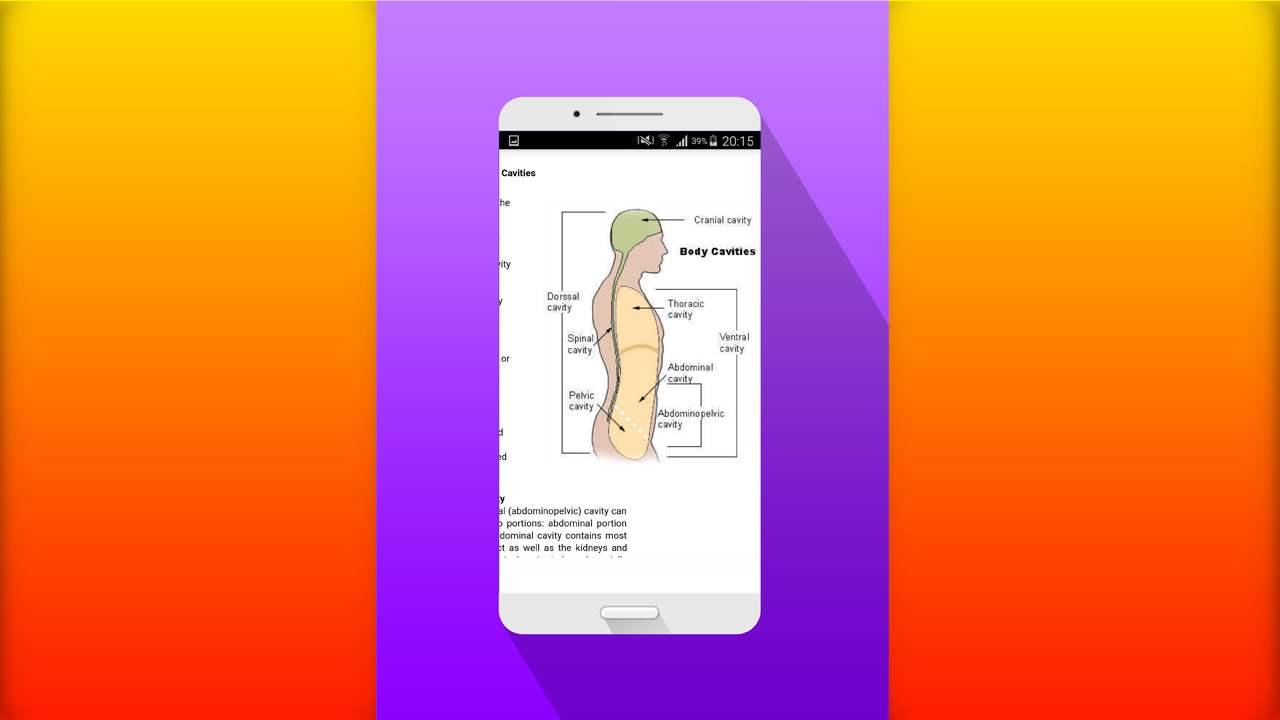 Zoom IMG-3 human anatomy free