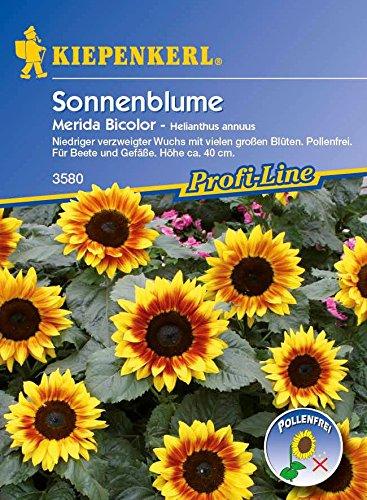 saatgut-sonnenblumen-merida-bicolor