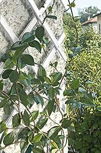 Tenax 73392021 Treplas Treillis Extensible pour Plantes Grimpantes Blanc