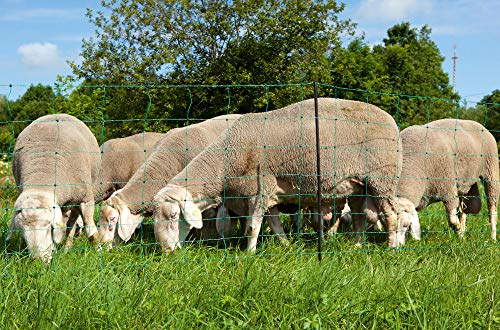 AKO Elektronetz, Schafnetz OviNet grün 108cm, Einzelspitze - 50m - 14 standfeste Kunststoffpfähle - ideal für Schafe & Lämmer