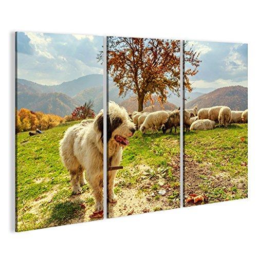 Cuadro Cuadros Perros cuidado de las ovejas en el pasto-Transilvania, Rumania Impresión sobre lienzo - Formato Grande - Cuadros modernos