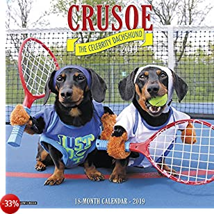 Crusoe the Celebrity Dachshund 2019 Calendar