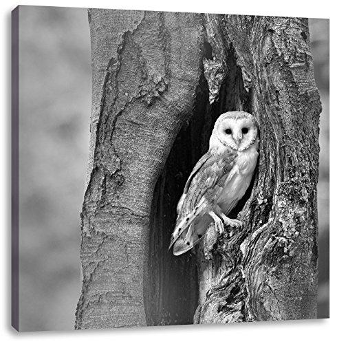 Schleiereule in der Baumhöhle Kunst B&W, Format: 70x70 auf Leinwand, XXL riesige Bilder fertig gerahmt mit Keilrahmen, Kunstdruck auf Wandbild mit Rahmen, günstiger als Gemälde...
