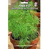 Vivai Le Georgiche Aneto (Anethum Graveolens) (Semente)