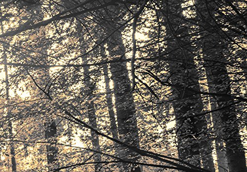 Neuheit! Modernes Acrylglasbild 135x45 cm - 1 Teile - 2 Formate zur Auswahl – Glasbilder – TOP - Wand Bild - Kunstdruck - Wandbild – Bilder - Wald Baum Natur Landschaft c-B-0077-k-c 135x45 cm - 7