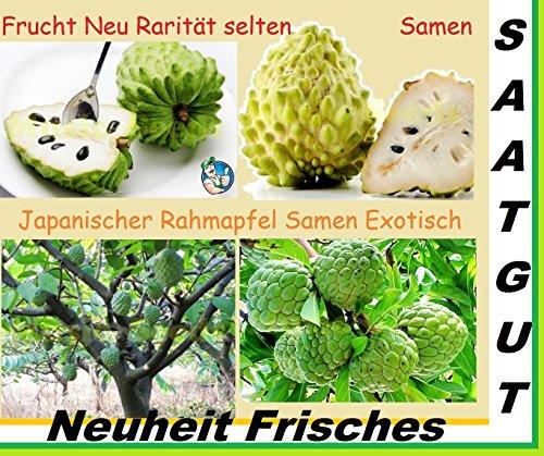 5x Japanische Rahmapfel Samen exotisch Früchte Hingucker Obst Pflanze Baum Rarität essbar lecker #179