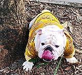 SULESI Tang Anzug Bulldogge Gesetz Kämpfen Englisch Neujahr Herbst Und Winter Kleidung Flut Festlichen Frühling Festival Abschnitt Dick [Zugeschnitten] Bieten...