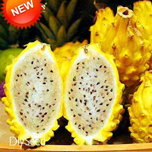 best-vente-100-pcs-graines-lot-jaune-pitaya-arbres-fruitiers-plantes-vivaces-non-ogm-hylocereus-drag