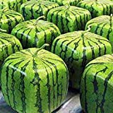 50 Stück Samen Seltene Einfache Wassermelonen Samen, Obst, Wasser-Melone-Samen-Hausgarten